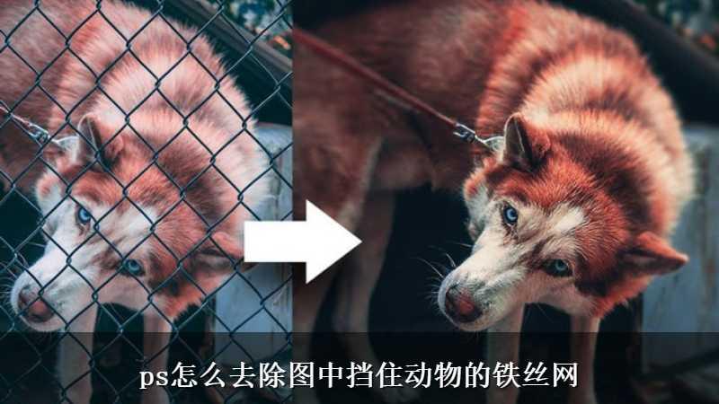 ps怎么去除图中挡住动物的铁丝网