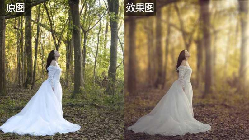 ps快速打造唯美秋季外景树林婚纱照片