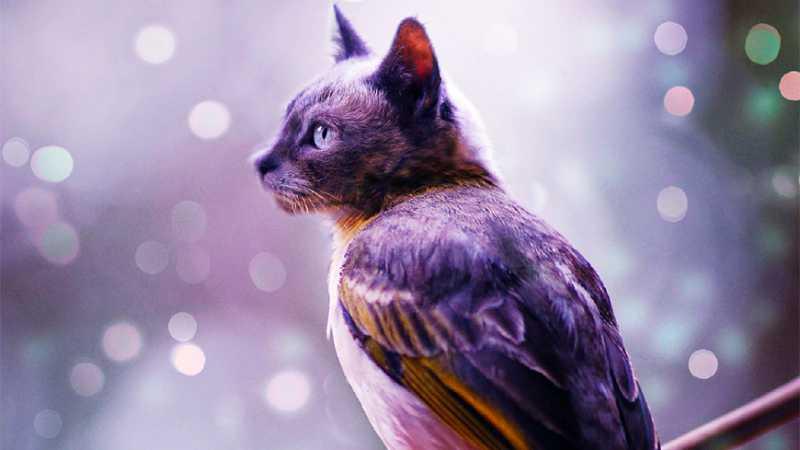 PS合成有趣的猫头鸟身动物