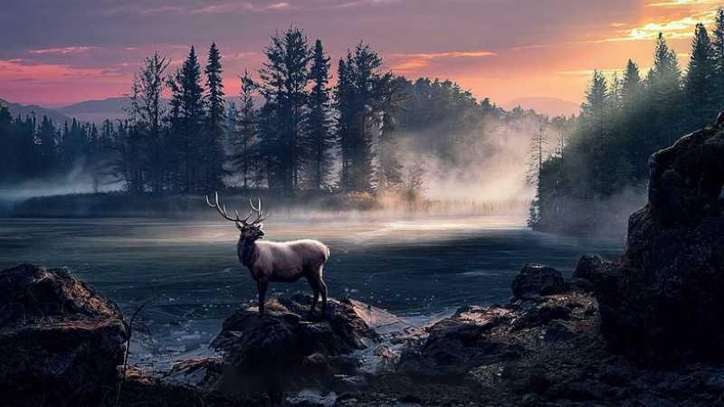 PS合成森林里的斑鹿梦幻场景
