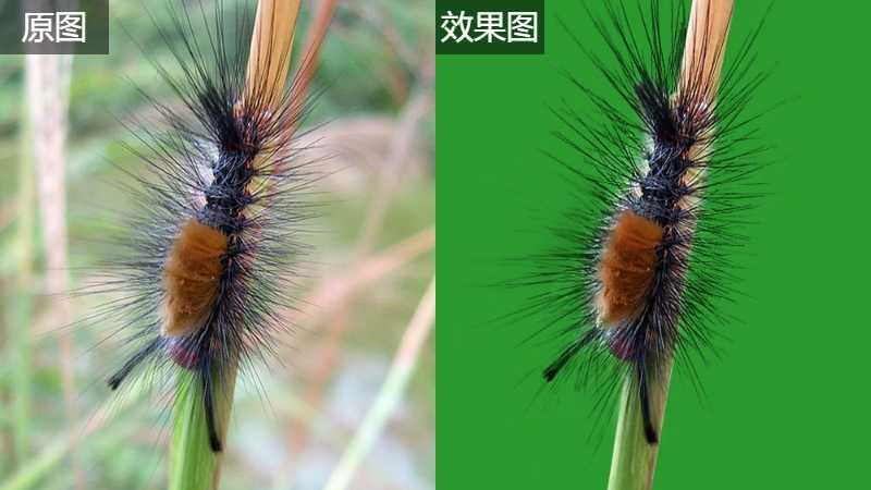 Photoshop使用抽出滤镜抠出多刺的毛虫
