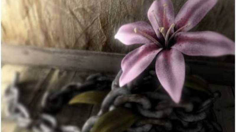 3DSMAX渲染被铁链束缚的花朵