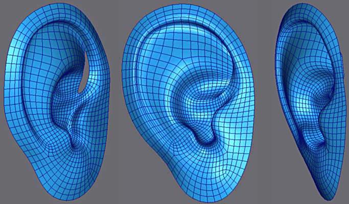 3ds Max耳朵建模教程(11)