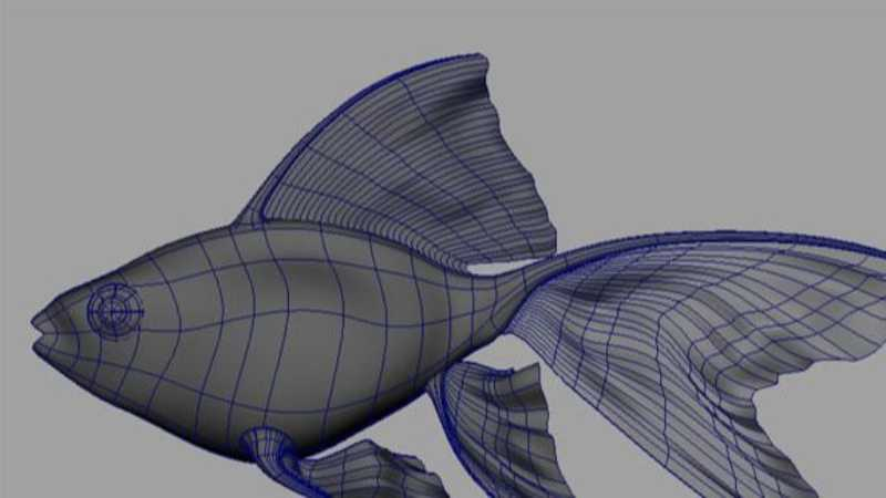 Maya制作鱼的模型