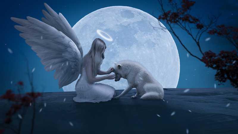 PS合成天使与野兽唯美场景