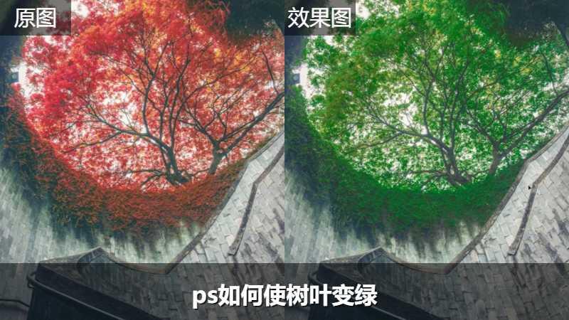 ps如何使树叶变绿
