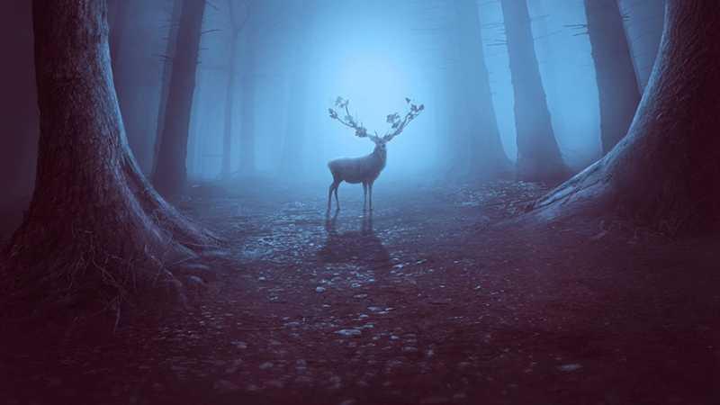 PS合成神秘森林场景