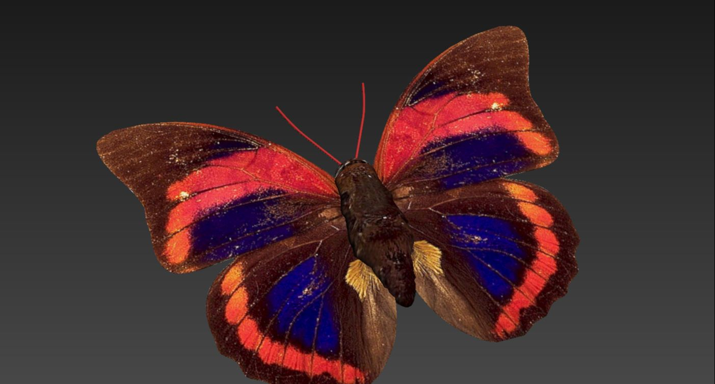 3dmax用PS导出路径快速蝴蝶建模教程(11)