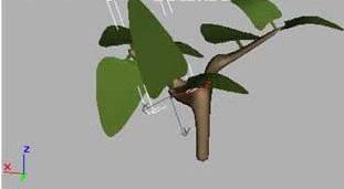 3ds Max制作树木(11)