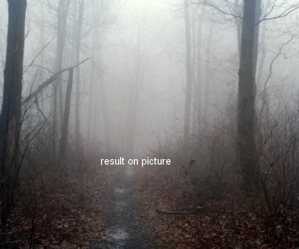 ps合成秋天树林中的美女场景(5)