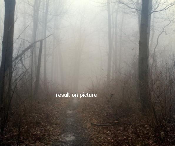 ps合成秋天树林中的美女场景(8)