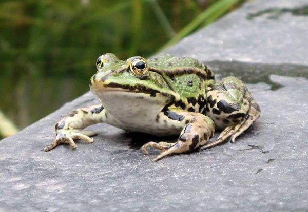 ps合成鳄鱼青蛙教程(1)