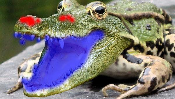 ps合成鳄鱼青蛙教程(11)